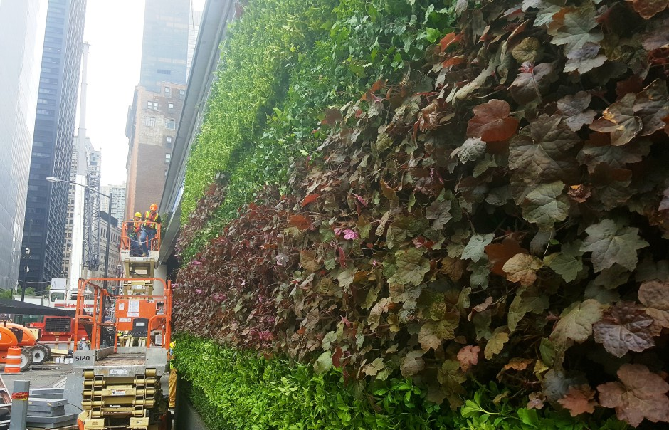 The Living Wall Up Close (00000002)